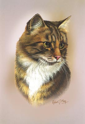 brown tabby shorthair cat print