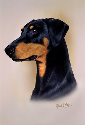 doberman pinscher head study print rmdh64 doberman pinscher head study ...