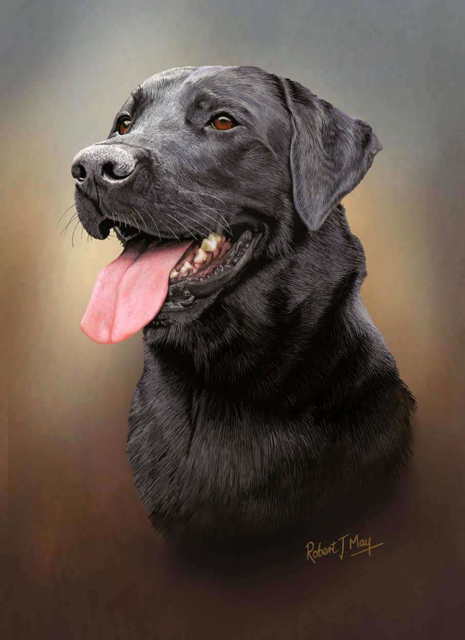 Limited Edition Black Labrador Retriever Head Study Print