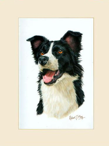 Original Border Collie Painting