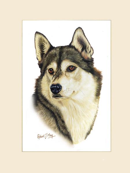 A Borzoi Dog Original Siberian Husk...