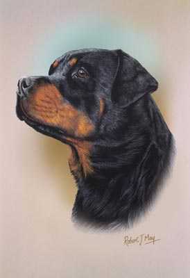 a study of the rottweiler How long is the rottweiler's lifespan a study published in an article for cancer epidemiology biomarkers and prevention in 2002, revealed a correlation between the age rottweilers are spayed and neutered and their lifespans.