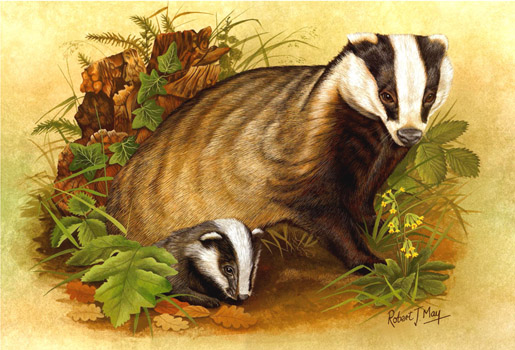 Badger & Cub Open Edition Signed Print RMWL05