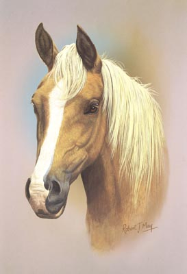 Horse Head Study Print Rmhh1