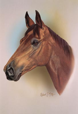 Horse Head Study Print Rmhh3