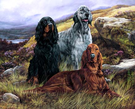 English Setter Oil Paintings