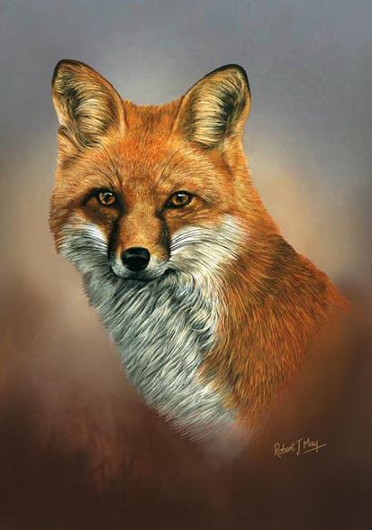 Ltd Edition Of 50 Fox Head Study Prints Rmle61