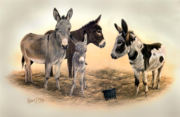 Signed Donkey Print Rmhh5